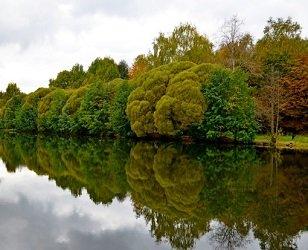 Совхозный пруд в Измайловском лесопарке.
