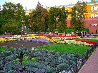 Цветники и клумбы Александровского сада.