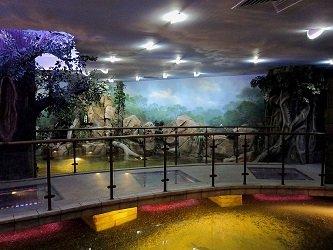 Зона Амазонка мостик с прозрачными вставками, через которые видно рыбок.