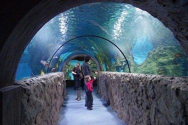 Подводный тоннель, соединяющий большие аквариумы.